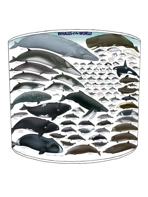 whales of the world lampshade 15